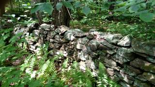 Old Stone Fence Line